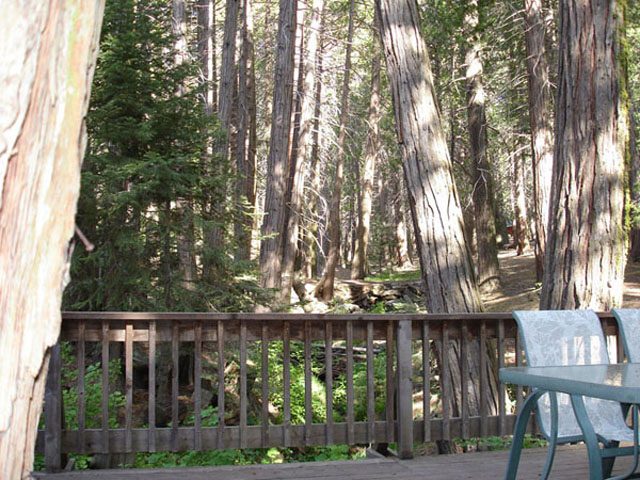 Sequoia National Forest off the back deck!
